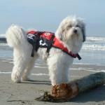 Hund_am_Strand_2